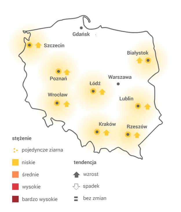 DĄB /Grafika RMF FM /
