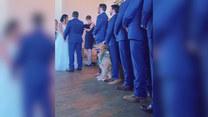 Dał czadu na ślubie. Towarzyski pies