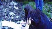 Darkthrone w lesie