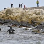 Darłówko: W morzu znaleziono ciało chłopca