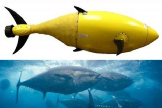 DARPA nadzoruje budowę robo-tuńczyka /materiały prasowe