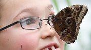 Darwin, motyle i ewolucja