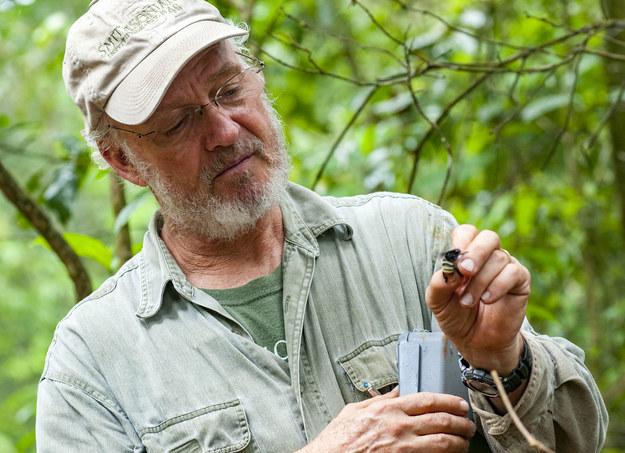 David Roubik z STRI w Panamie podczas badań pszczół /Jorge Aleman, STRI /Materiały prasowe