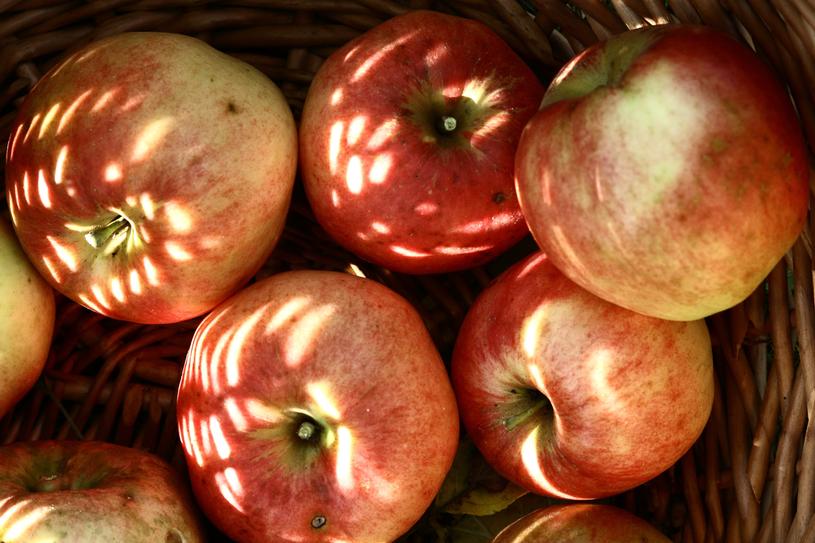 Dawne polskie odmiany jabłek są bogatsze w przeciwutleniacze /123RF/PICSEL