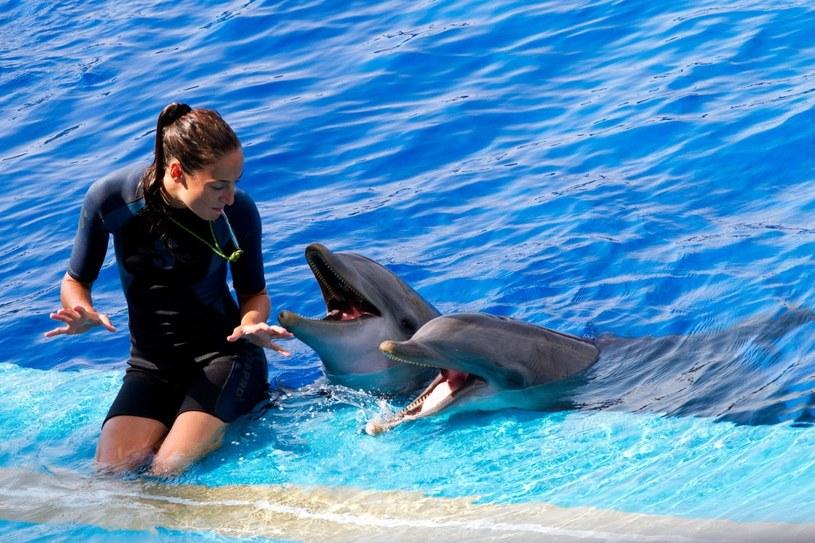"""Delfiny, choć z reguły przyjazne, w okresie wzmożonego ruchu w obszarach nurkowych urządzają """"strajk"""" przeciwko wszechobecnemu hałasowi /123RF/PICSEL"""