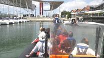 Delfiny powróciły do Lizbony