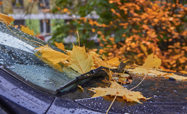 Deszcz w całym kraju. Maksymalnie 13 st. C. Sprawdź prognozę pogody