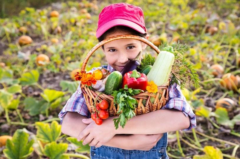 Deszcze utrudniły zbiory warzyw . Ceny jabłek w skupach wynoszą poniżej 20 gr za kilogram /123RF/PICSEL