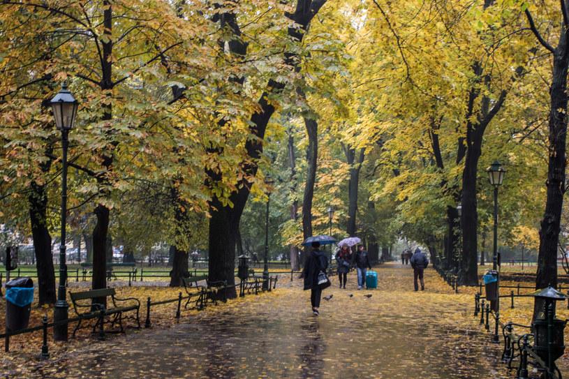 Deszczowa jesień na krakowskich Plantach /Jan Graczyński /East News