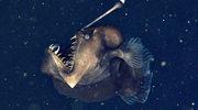 Diabeł morski - możesz zapomnieć o Megalodonie