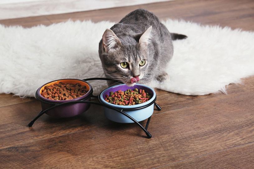 Dieta kotów jest kluczowa jest prewencji chorób nerek /123RF/PICSEL