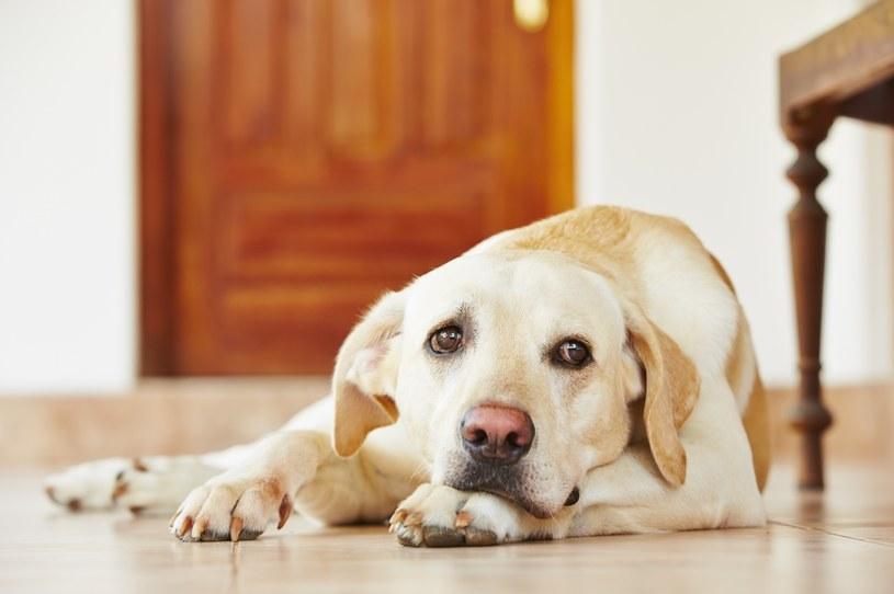 Dieta psa powinna być dostosowana do jego wieku, wagi, a nawet rasy /123RF/PICSEL