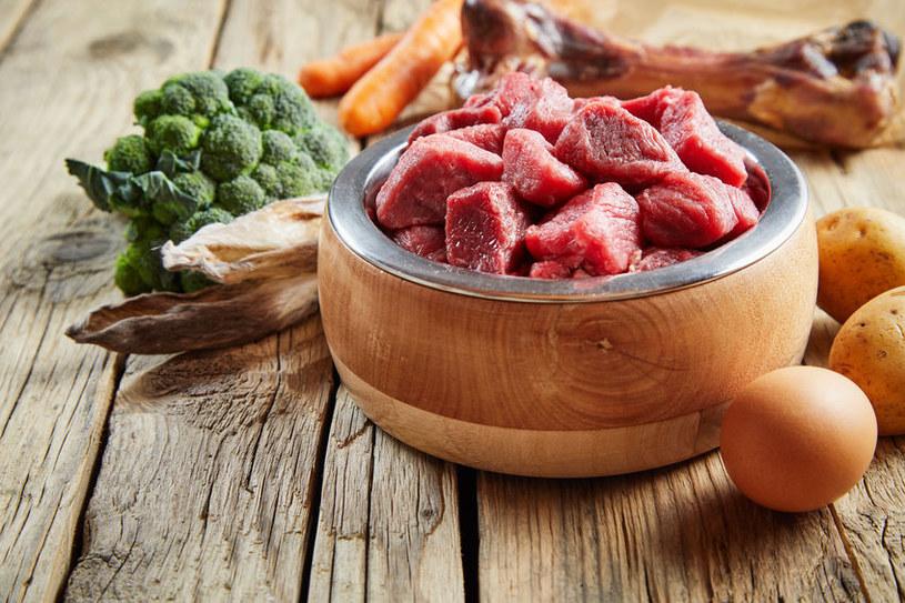 Dieta psa powinna składać się w większości z mięsa