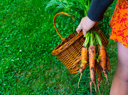 dieta wegetariańska /© Photogenica