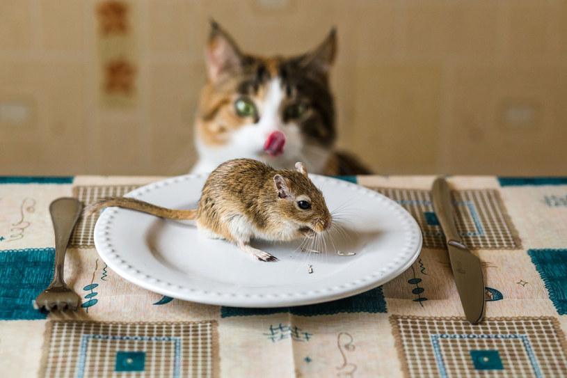 """Dieta whole prey, czyli """"cała ofiara"""", zyskuje coraz większą popularność wśród właścicieli kotów i psów /123RF/PICSEL"""