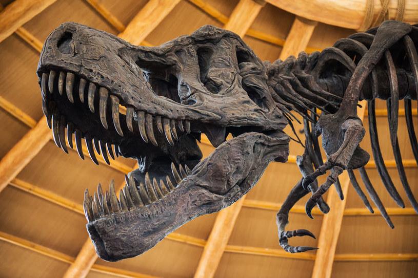 Dinozaury wymarłyby tak czy inaczej, niezależnie od uderzenia asteroidy /123RF/PICSEL