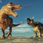 Dinozaury żyły w Arktyce cały rok