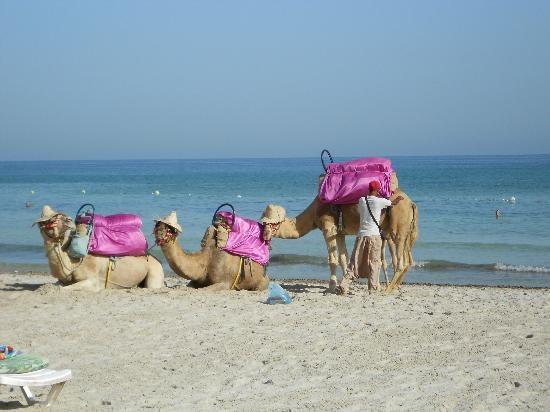 Djerba atrakcje turystyczne - 2 /© Photogenica