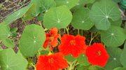 Dla Czarodziejki i Innych Przyjaciolek - Lucia ogrodniczka