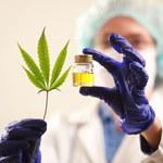 Dla osób palących marihuanę koronawirus jest bardziej niebezpieczny