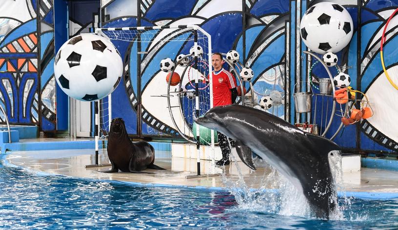 Dla polskich piłkarzy został przygotowany pokaz w delfinarium /Jacek Piski /Reporter