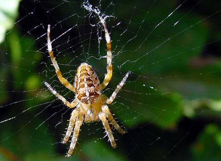 Dlaczego boimy się pająków i węży? /© Panthermedia