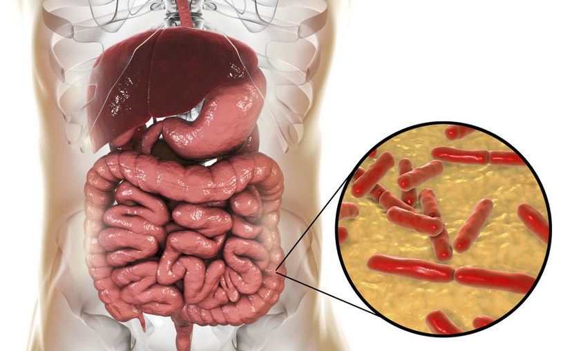Dlaczego flora bakteryjna jelit jest tak ważna? /©123RF/PICSEL