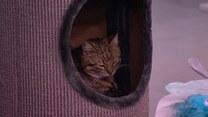 """Dlaczego kot drapie meble? """"To nie są przypadkowe miejsca"""""""