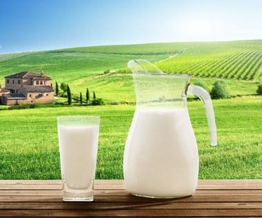 Dlaczego krowie mleko jest niezastąpione?