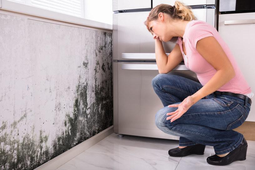 Dlaczego pleśń jest tak niebezpieczna dla zdrowia? /©123RF/PICSEL