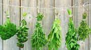 Dlaczego warto hodować zioła?