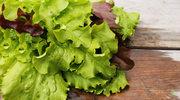 Dlaczego warto jeść sałatę