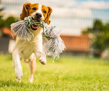 Dlaczego warto mieć psa? Zaskakujące korzyści