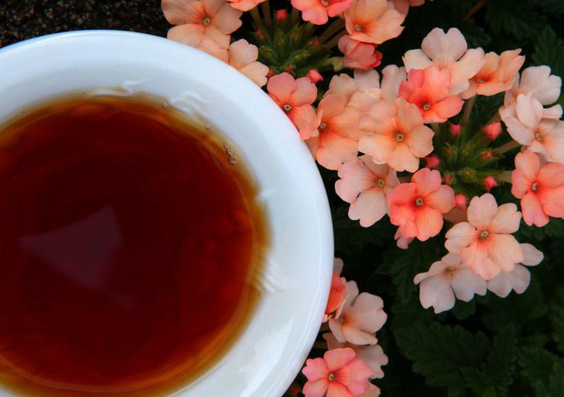 Dlaczego warto pić czerwoną herbatę? /©123RF/PICSEL