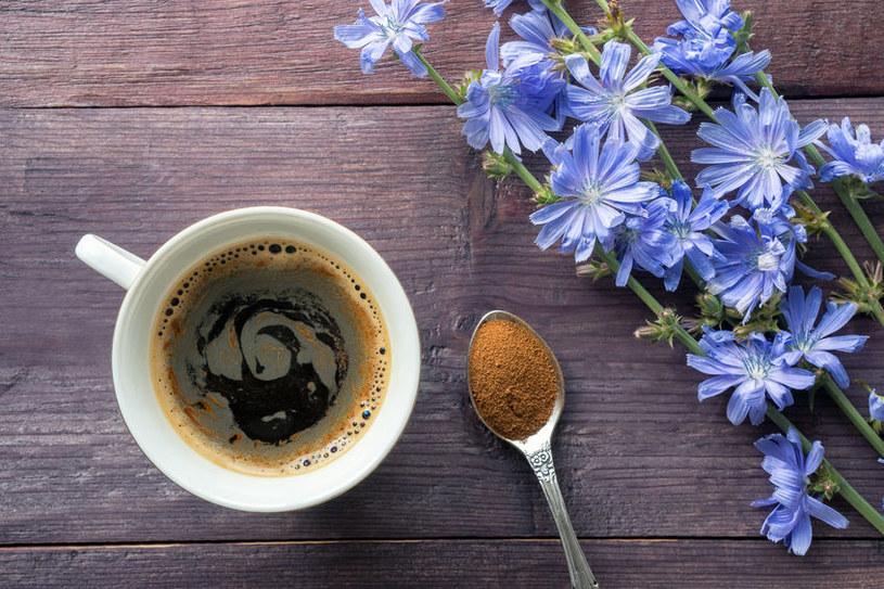 Dlaczego warto pić kawę z cykorii? /©123RF/PICSEL