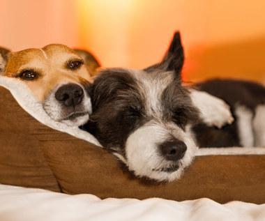 Dlaczego warto spać z kotem lub psem? Zaskakujące korzyści