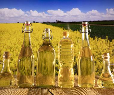 Dlaczego warto stosować olej rzepakowy?