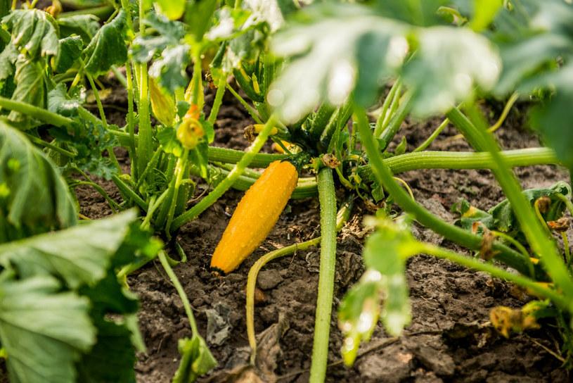Dlaczego żywność genetycznie modyfikowana wzbudza tyle emocji? /Marcin Bruniecki /East News