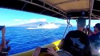 Długopłetwce oceaniczne ochoczo prezentują się turystom