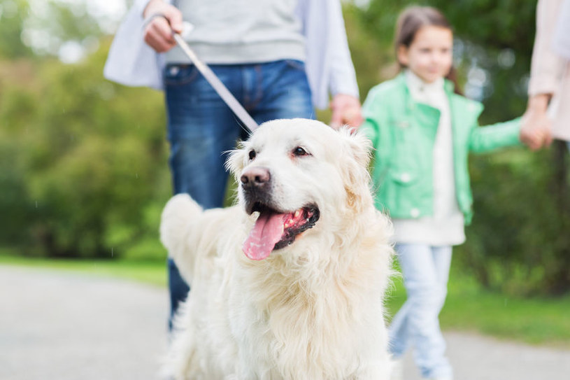 Dłuższe spacery z psem są dobrym wstępem do regularnej aktywności