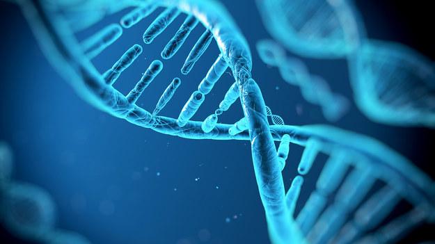 DNA / inf. prasowa /&nbsp