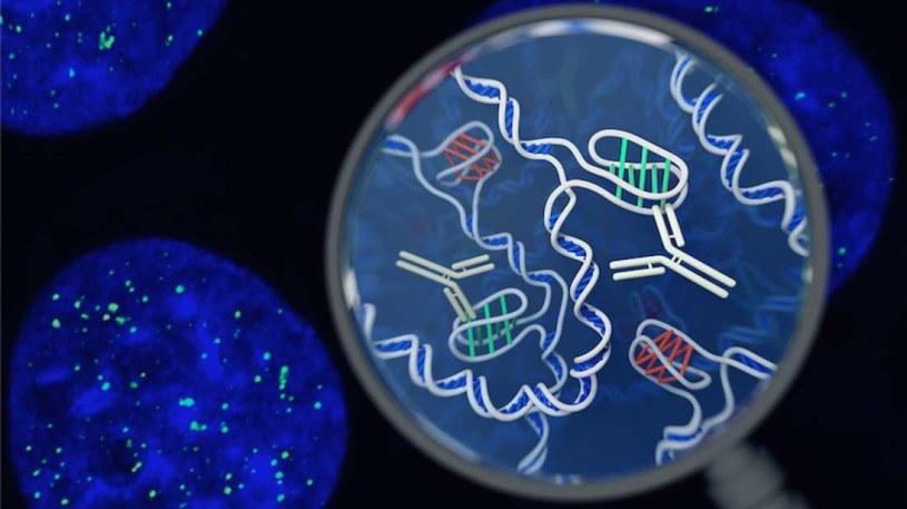 DNA wciąż skrywa wiele tajemnic /materiały prasowe