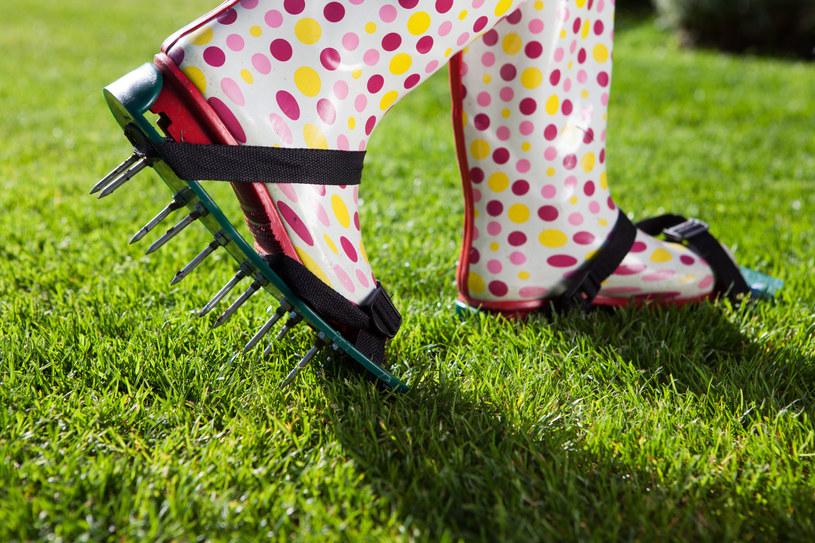 Do aeracji trawnika użyć można specjalnych nakładek na buty /123RF/PICSEL