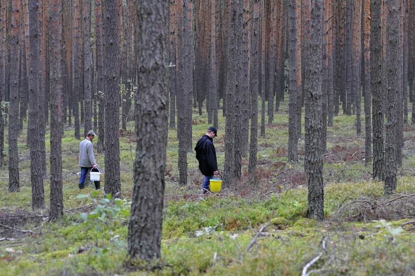 Do ataku doszło w lesie podczas grzybobrania; zdj. ilustracyjne /Piotr Kamionka /Reporter