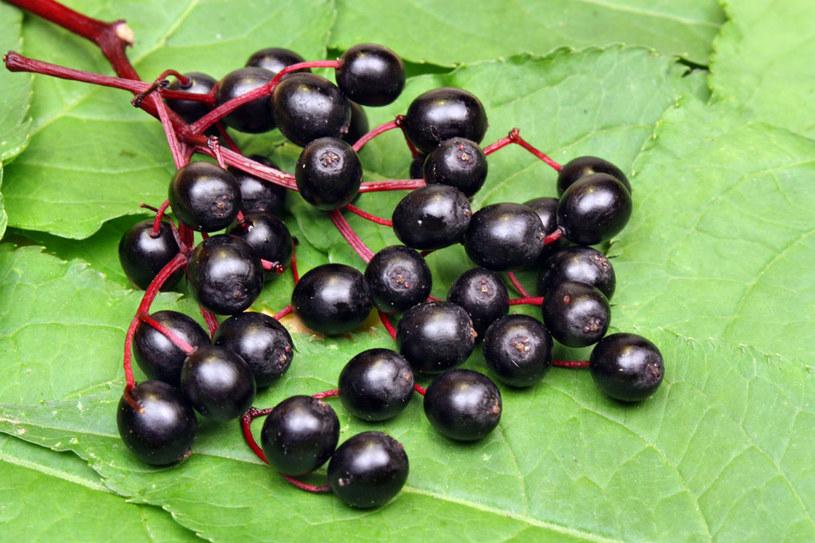 Do domowego lecznictwa nadają się wszystkie części czarnego bzu: kwiat, owoc, liście, kora i korzeń /123RF/PICSEL