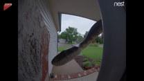 Do drzwi zapukał... wąż. Kobieta była zdumiona