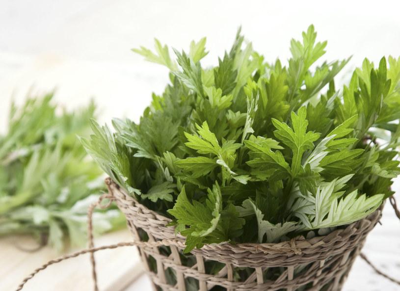 Do leczniczego wina z piołunu używa się świeżych liści rośliny /123RF/PICSEL