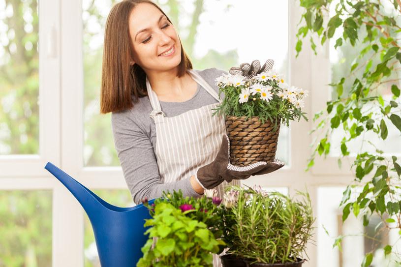 Do podlewania roślin doniczkowych najlepiej nadaje się przegotowana lub odstała woda. /123RF/PICSEL