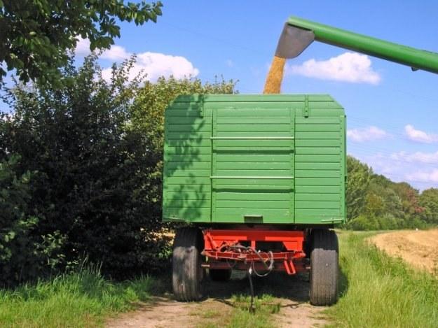 Do Polski bądą importowane tanie, wyprodukowane gdzie indziej pasze GMO /© Panthermedia