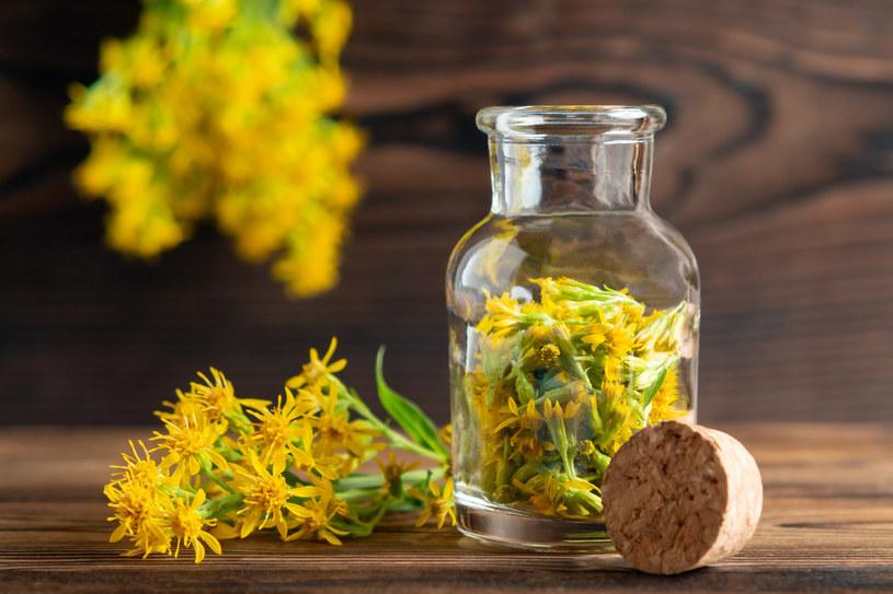 Do przygotowania syropu z nawłoci wykorzystuje się wyłącznie kwiaty /123RF/PICSEL